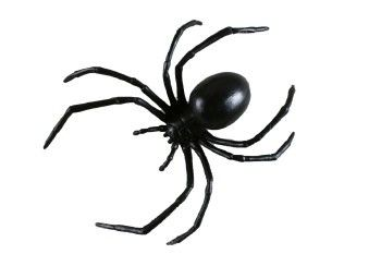 Black Widow Spider (15 cm)